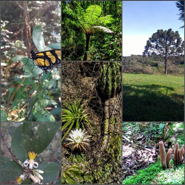 Curso de Pós-Graduação em Biodiversidade e Conservação, ofertado gratuitamente pelo Instituto Federal Farroupilha - Campus Panambi